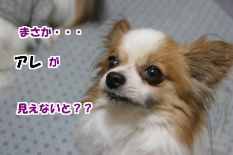 IMG_1506-7.jpg