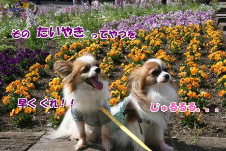 IMG_2489-1.jpg