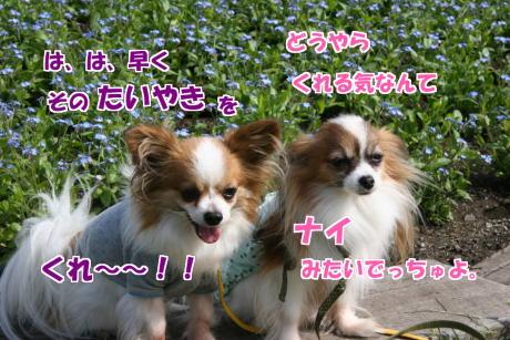 IMG_2494-1.jpg