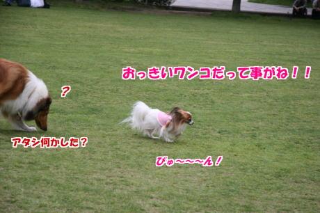 IMG_3015-77.jpg
