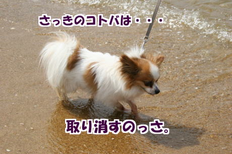 IMG_3300-7.jpg