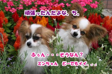 IMG_3344-7.jpg