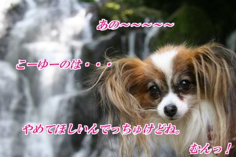 IMG_3977-77.jpg