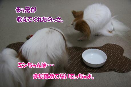 IMG_4485-77.jpg