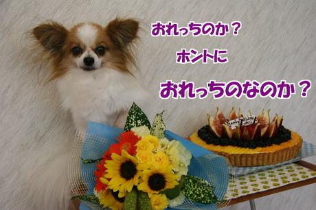 IMG_4535-77.jpg
