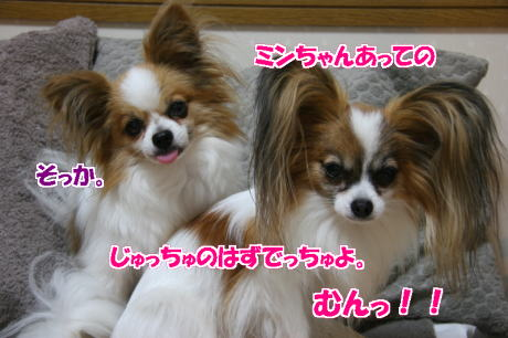 IMG_4678-77.jpg
