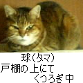 20041224160020.png