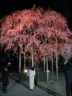 大国魂神社の桜-20070328-06