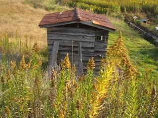 セイタカアワダチソウの小屋8558