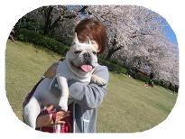 松川の桜の2