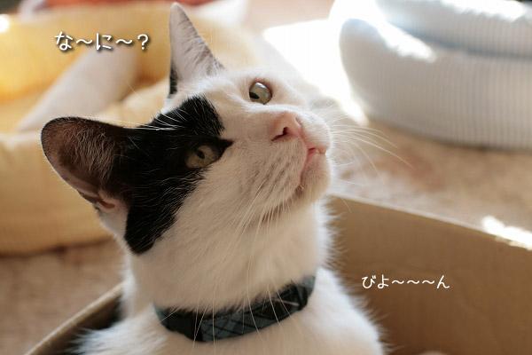 福にぴったりの青8