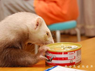 缶詰が欲しい!?