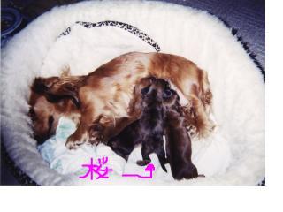 snap_fumi777_2009126213132.jpg