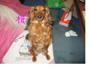 snap_fumi777_20095401429.jpg