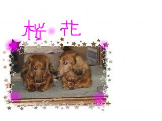 snap_fumi777_20096121592.jpg