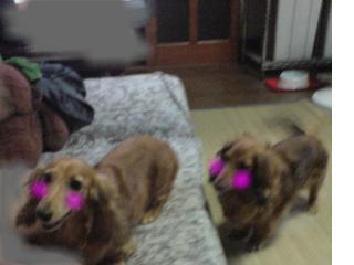 snap_fumi777_200983221730.jpg