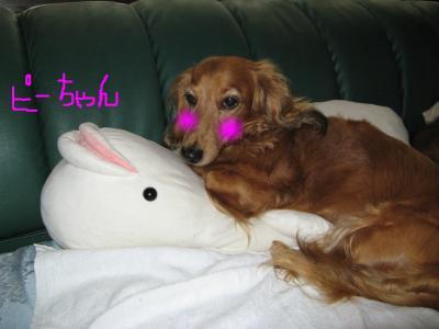 snap_fumi777_200991211455.jpg