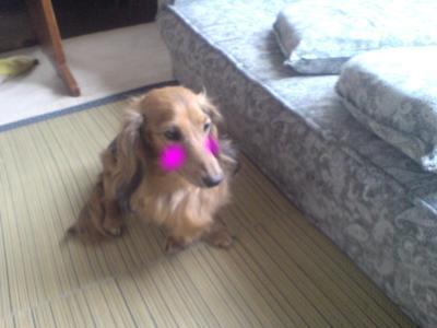 snap_fumi777_200993225614.jpg