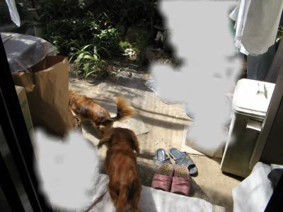 snap_fumi777_20099422324.jpg