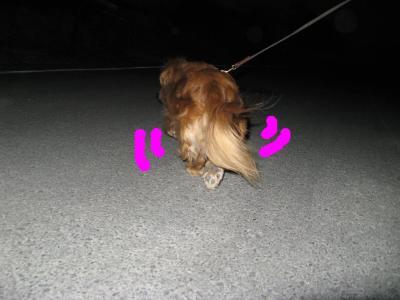snap_fumi777_200995214558.jpg