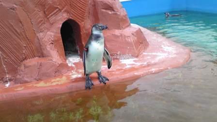 ペンギン太郎