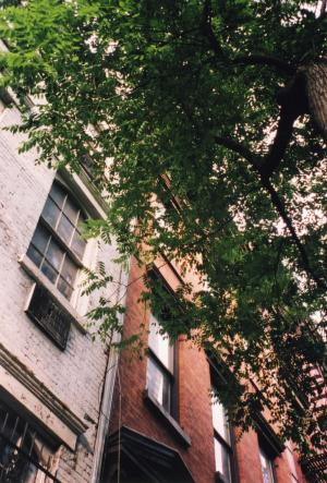 NY 風景