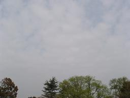 20060413a.jpg