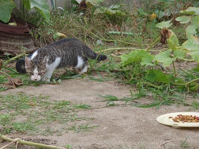仔猫「なんか食べ物があるぞ」