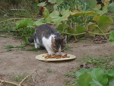 仔猫「うまうま」お皿をしっかり押さえている
