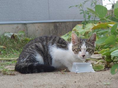 仔猫「変な人が見てる・・・」