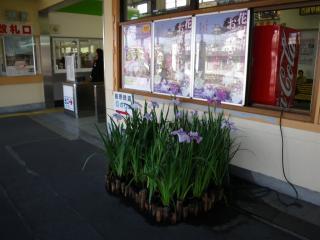 諫早駅の花しょうぶ