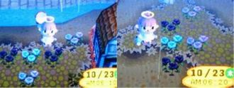 青バラ081023