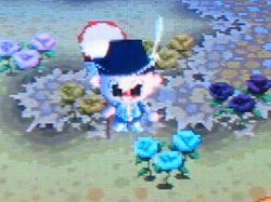 青バラ081121