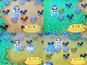 青バラ01