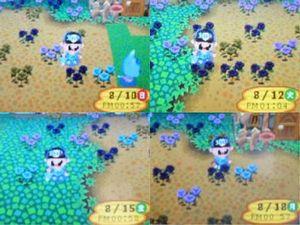 青バラ02