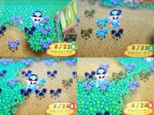 青バラ03