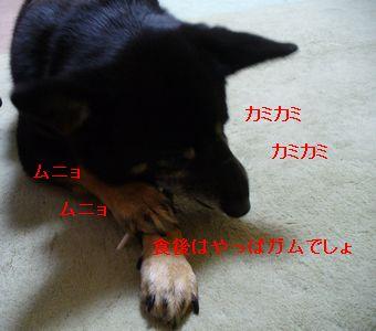 P1160792.jpg
