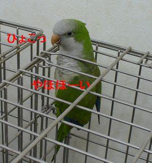 P1160858.jpg