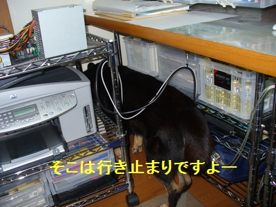 P1180803.jpg
