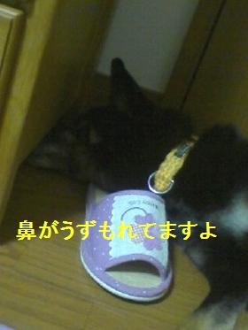 PA0_0019_20090807182416.jpg