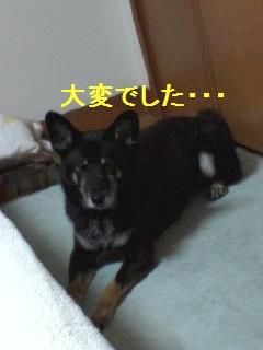 PA0_0019_20091005005414.jpg