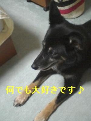 PA0_0020_20090804235527.jpg