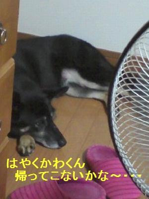 PA0_0021.jpg