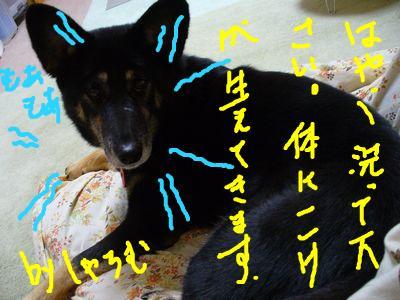 snap_galatia62_20093610217.jpg