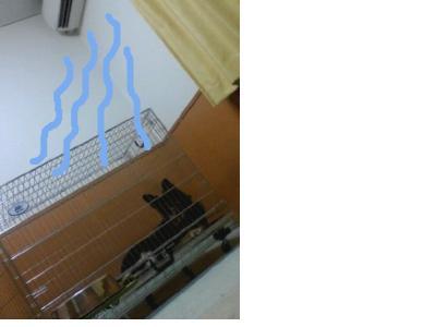 snap_galatia62_200974221236.jpg