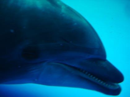 DSC05824_dolphin.jpg