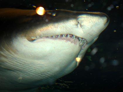 DSC05828_shark.jpg