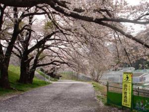 fujigawa5614.jpg