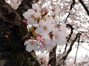 oohoushikouen5603.jpg
