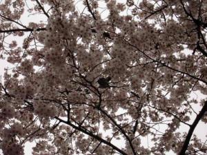 oohoushikouen5605.jpg